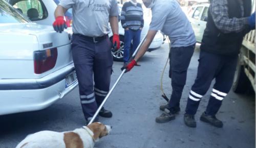 """""""BAŞI-BOŞ KÖPEKLERİ TOPLUYORUZ."""""""